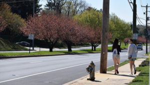 West Chester Pike in Newtown Square