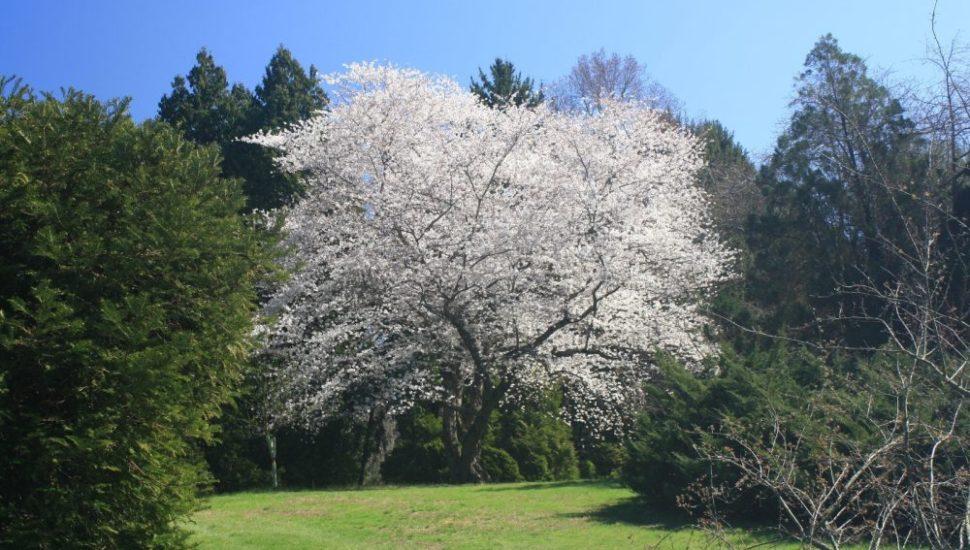 Widener Arboretum