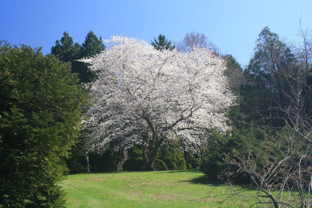 Widener University Acquires Historic Grounds of Wallingford's Taylor Arboretum