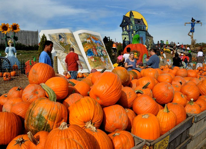 Summer Heat Scorches Media's Linvilla Orchards, Forces Outsource for Pumpkins