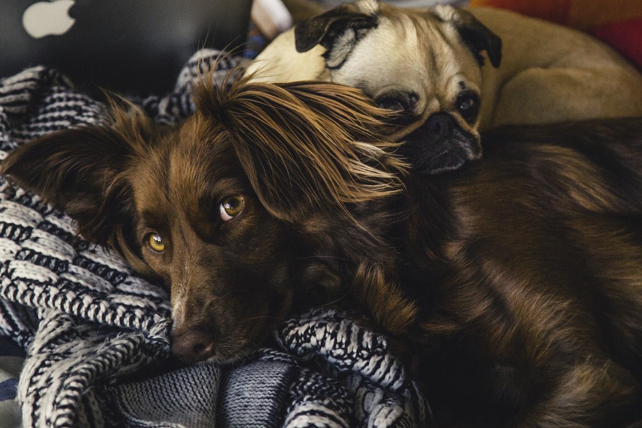 5 Fun Pet Products