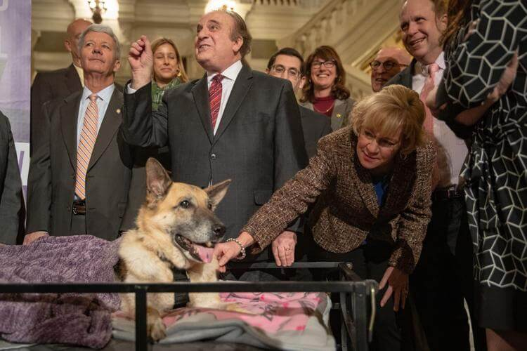 Local Politicians Reach Across the Aisle to Introduce Legislation to Eradicate Puppy Mills