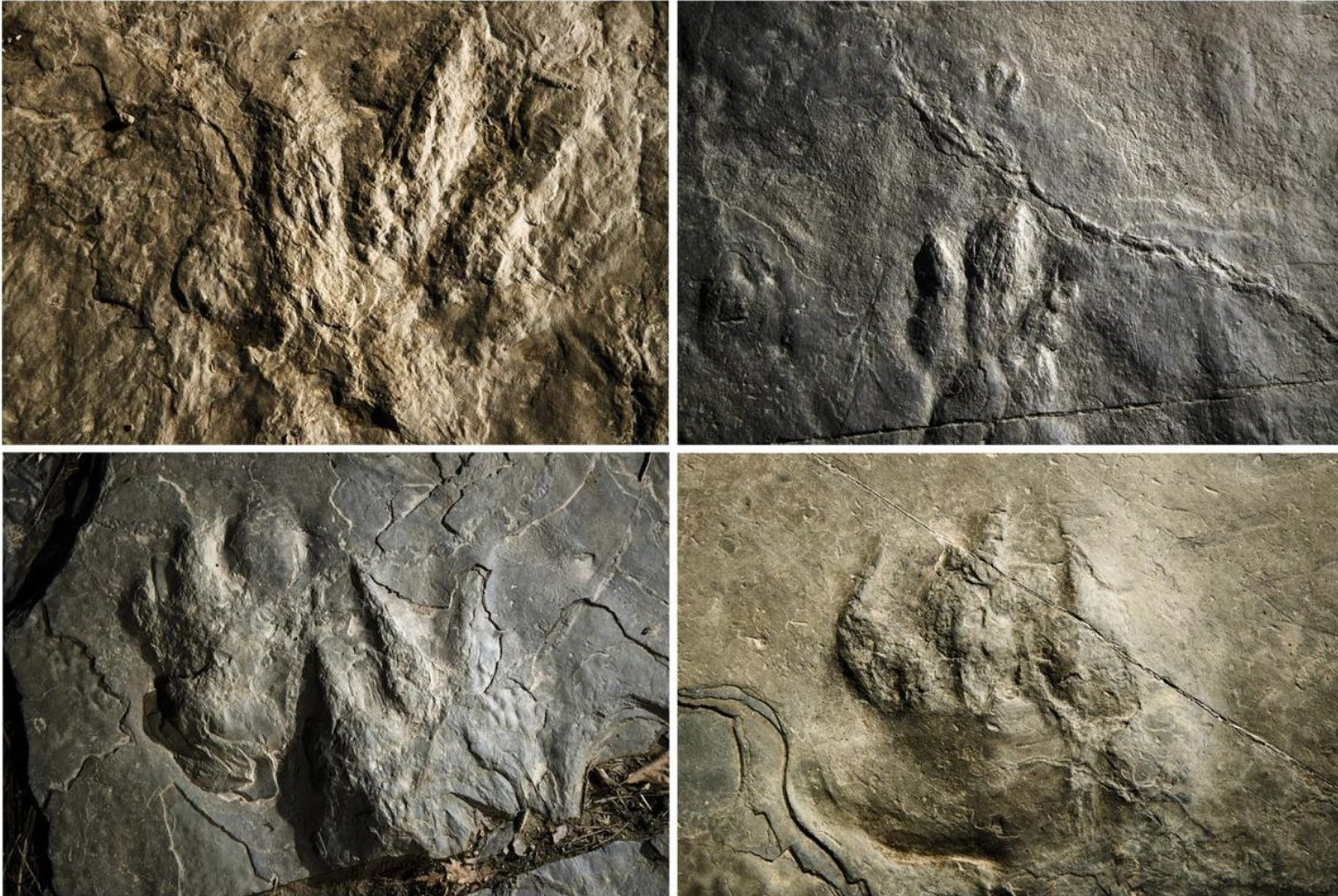 Dinosaur Tracks Discovered in Valley Forge Park