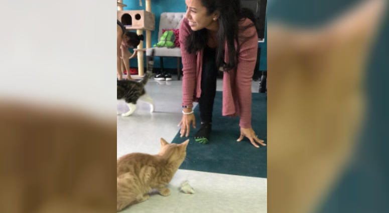 Norwood Cafe Offers a Different Kind of Yoga Class. This One's Got Cats