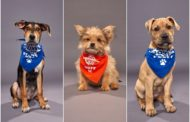 Puppy Bowl Brings Us a Winning Champion–Kingery, From Media's Providence Animal Center