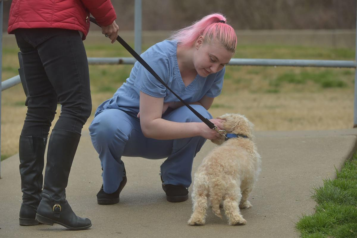 Media Veterinary Hospital Offers Curbside Service for Pets as It Adapts to Social Distancing