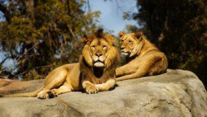Zoo - DELCO.Today