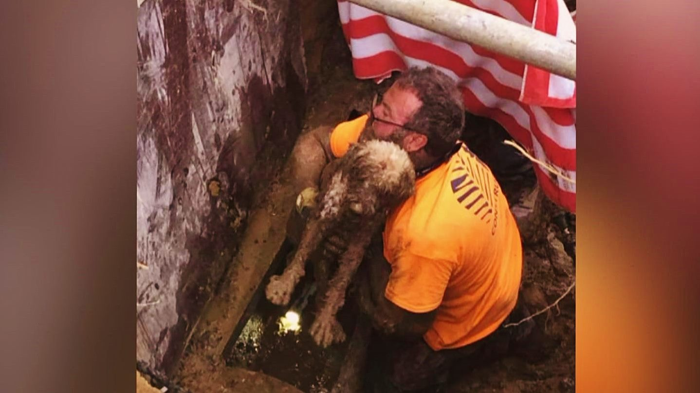 Glen Mills Construction Company Rescues Blind Dog Trapped in Pipe