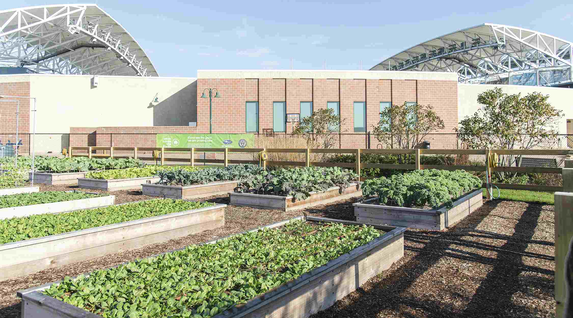 Subaru Stadium Garden Could Give Chester Food Banks 4,200 Pounds of Fresh Produce a Year