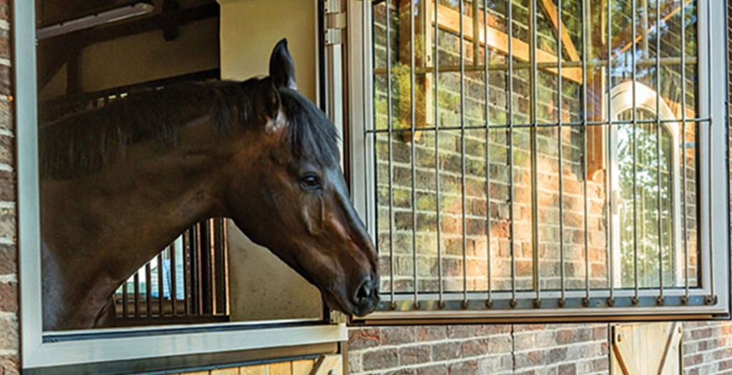 The Shows Must Go On: Malvern Bank Goes Behind the Scenes with Horse Show Management