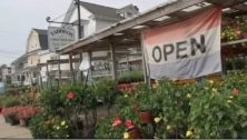 Residents can feed their gardens at Taddeo's Greenhouses in Havertown