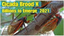cicadas crowdsourcing app