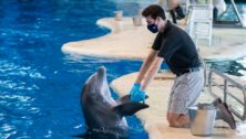 Julian Levin works with a dolphin at the National Aquarium in Baltimore