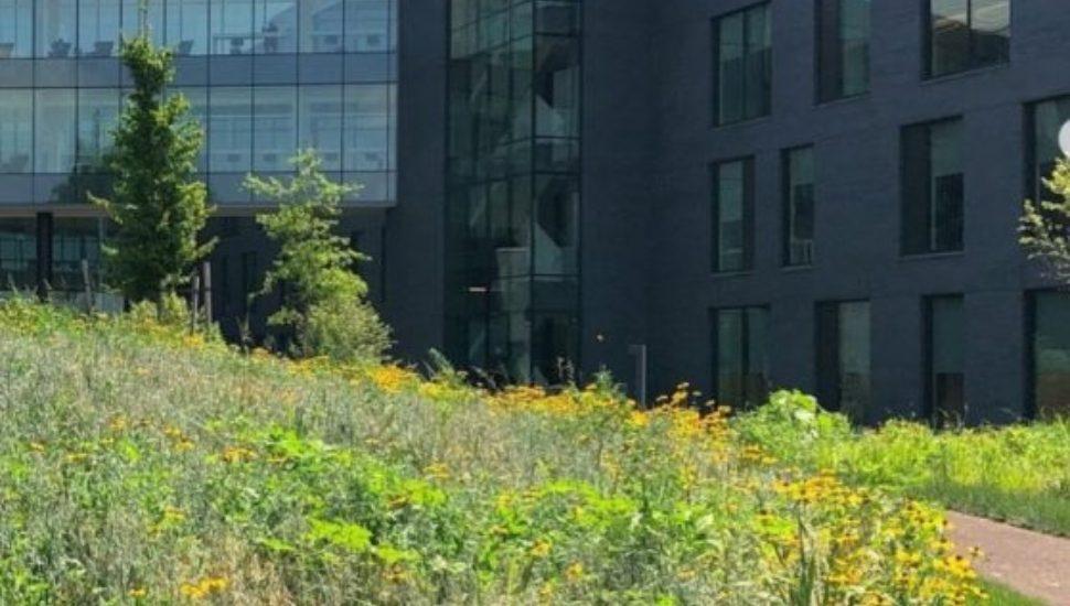 enn Medicine Radnor features rain gardens in its landscape design.