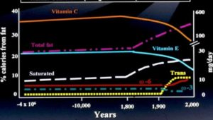 A chart indicating the human diet through time.