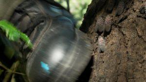 Spotted Lanternfly Pennsylvania economy
