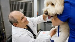 """Veterinarian Michael Weiss D.V.M. smiles at """"Gatsby"""" before taking a blood sample."""